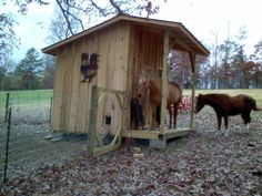 When there's a horse at the door of the chicken coop. :o  via The Chicken Chick on Facebook