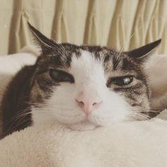 あなただんだん眠くなる#goodnight #lovecats #cats #cat #猫