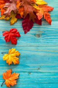 Blue wood texture, autumn