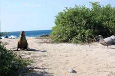 Sunbathe. #Galapagos #Cruises #Nature #Landscapes #NemoCruises #Travel #Islands