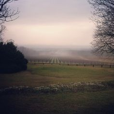 Beautiful sea view over the vines at Blenheim Vineyards Photo by blenheimvineyards