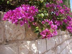 Cómo usar plantas de enredadera para cubrir los cimientos | eHow en Español