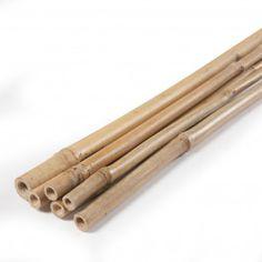 GUÍA DE CAÑA DE BAMBÚ La Guía de Caña de Bambú es perfecta para proyectos de decoración, jardinería y vallado. Ofrece un toque exótico a tu jardín o terraza combinada con la Caña de Bambú. Disponible en diferentes longitudes y unidades por blíster. #GuíaCañadeBambú #CañadeBambú #BambooCane Cinnamon Sticks, Spices, Tableware, Gardens, Bamboo Canes, Going Gray, Terrace, Interior Design, Budget