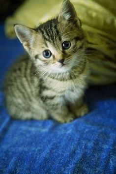 .love  that adorable kitty!