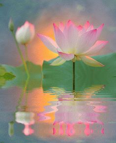 Lotus Flowers Gif, Pretty Flowers, Beautiful Gif, Beautiful Roses, Lotus Azul, Gif Bonito, Foto Gif, Good Morning Flowers, Glitter Graphics