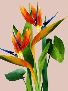 Tropical Bird Of Paradise Poster Decals eagle owls of paradise birds Bird Of Paradise Yoga, Birds Of Paradise Flower, Tropical Birds, Tropical Flowers, Tropical Paradise, Posca Art, Bird Book, Birds And The Bees, Plant Painting