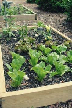 Very simple directions. Must Do! Eastern Shore Lifestyle News | Shore Bread Magazine - Create an Above Ground Garden for Under $25: Grow Your Own Vegetables and Herbs