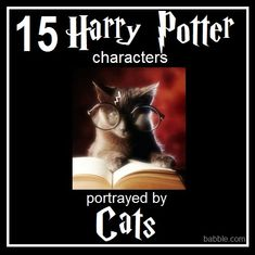 15 Harry Potter Characters Portrayed by Cats - Babble
