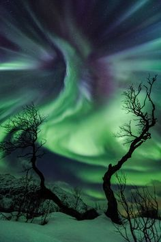 Creature © Ole Christian Salomonsen (Norway) On 30 October a CME (Coronal Mass Ejection) hit Earth, displaying multi-coloured auroras across the sky for most of the night in Kattfjordeidet, Tromsø, Norway. The old birch trees resemble arms reaching for the auroral corona appearing like a strange creature in the sky.
