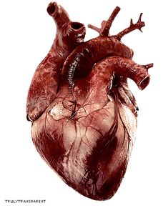 Animated gif shared by Venus. Find images and videos about gif, black and white and heart on We Heart It - the app to get lost in what you love. Anatomy Art, Human Anatomy, Heart Anatomy, Heart Gif, Anatomical Heart, Human Heart, Gif Animé, Animated Gif, Anatomy And Physiology