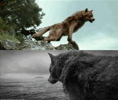 Jacob wolf gif