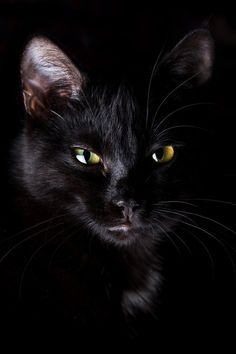 pretty black cat