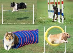 Google Image Result for http://willowcreekpet.com/wp-content/uploads/2011/05/dog-agility.jpg