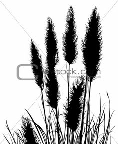 Illustration about Pampas Grass Silhouette - Vector File, change colors as you like. Illustration of nature, vegetation, grass - 1688121 Grass Silhouette, Silhouette Painting, Silhouette Vector, Grass Drawing, Wall Drawing, Plant Illustration, Botanical Illustration, Nz Art, Decal
