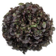 BuRed Oakleaf lettuce Bughatti is a vigorous red oak leaf with healthy base and strong root system. Red Oak Leaf, Lettuce Seeds, Seed Catalogs, Root System, Fast Growing, Herbs, Healthy, Type, Garden