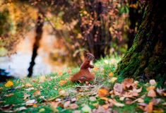 In the autumn forest HD Wallpaper Autumn Forest, Autumn Trees, Computer Wallpaper, Wallpaper Backgrounds, Forest Wallpaper, Windy Day, Bokeh, Spirit Animal, Background Images