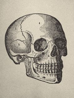 Side View of Skull Anatomy Engraving Iron On by EverythingGraphic, $0.99