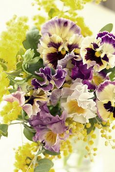 mimosa pansy I grow lots of pansies, in the ground, in hanging plant pots, window-boxes, you name it. #Keeping it in the Family