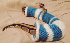 That snake is still the same temperature he was. Reptiles are cold blooded. Only mammals can make their own pleasant heat inside a sweater. Cute Reptiles, Reptiles And Amphibians, Mammals, Cute Funny Animals, Funny Cute, Animals And Pets, Baby Animals, Animal Pictures, Funny Pictures
