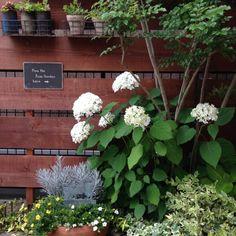 多肉寄せ植え/ガーデンフェンス…などのインテリア実例 - 2015-06-20 20:30:18 | RoomClip(ルームクリップ)
