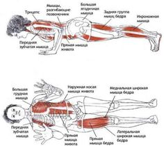 1000 images about plank excercise on pinterest  strength