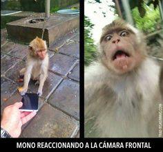 Mono reaccionando a cámara frontal. #humor #risa #graciosas #chistosas #divertidas
