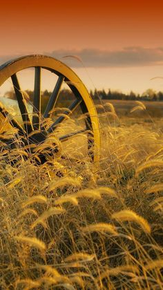 Image uploaded by Sarah. Find images and videos about beautiful, nature and photo on We Heart It - the app to get lost in what you love. Country Farm, Country Life, Country Girls, Wallpaper Paisajes, Fields Of Gold, Foto Art, Image Hd, Mellow Yellow, Farm Life
