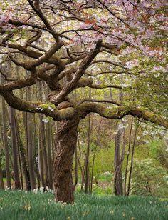 #gnarly tree