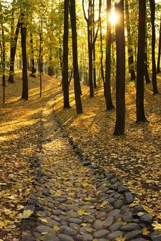 ✯ Yellow Forest Stone Path, Germany