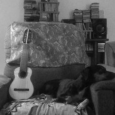 A Guria e e o charango... #charango #dog #cachorro
