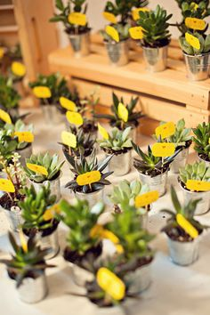love the yellow name cards inside of these succulent escort cards / wedding favors | Photo by Melvin Gilbert Photography