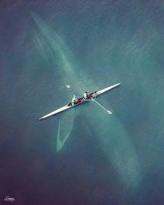 Blue Whale swimming under the rowers. Photo by @d_fordesign.