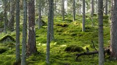 I love walking through a forest with a carpet of moss like this one. Thanks for sharing on Google+ Risto Talman
