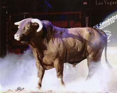 I love this bull!!