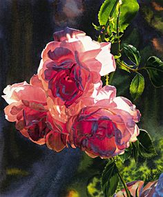 Roses in the Morning, by Carol Evans