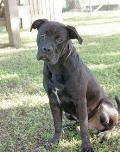 Animal Shelter adopt a pet; Shelter Dogs, Animal Shelter, Rescue Dogs, Animal Rescue, Pitbull Adoption, Pet Adoption, Foster Animals, Outdoor Cats, Save Animals
