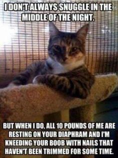 Feline Humor – The Struggle Is Real Funny Animal Pictures, Funny Animals, Cute Animals, Animal Pics, Dating Humor, Crazy Cat Lady, Crazy Cats, Funny Cute, Hilarious