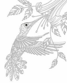 Advanced coloring hummingbird page
