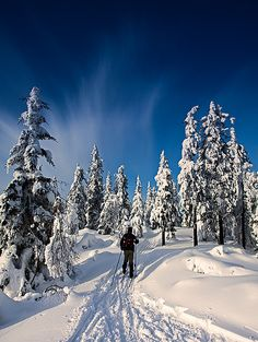 how to telemark/back-country ski