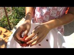 Bulgarian lutenitza how to make Lutenitza - YouTube