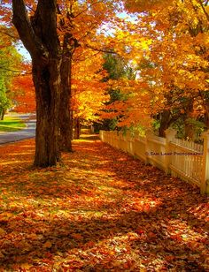 Autumn in Bennington, Vermont (photo by Sam Lamp) Beautiful World, Beautiful Places, Autumn Scenes, Autumn Aesthetic, Seasons Of The Year, All Nature, Fall Pictures, Belle Photo, Fall Halloween