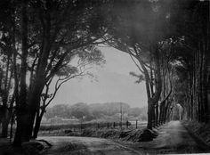 """""""Lover's Walk, Constantia"""", Where is/was this? Old Photos, Vintage Photos, History Of Wine, Sky Garden, Cape Town, South Africa, Past, Art Photography, Country Roads"""