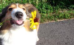 La Stampa - Per l'arrivo della primavera cani e gatti festeggiano così