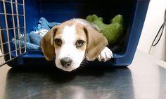 chien vétérinaire