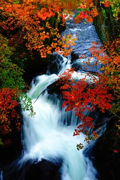 Ryuzu Fall, Japan #AutumnLeaves