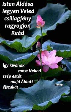 Good Night, Humor, Plants, Nighty Night, Humour, Have A Good Night, Moon Moon, Flora, Plant