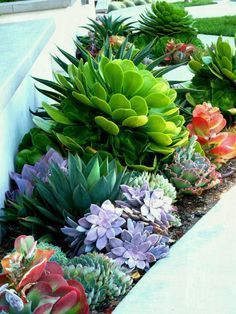 Plantes Grasses Differentes Plante Grasse A Fleur Jardin