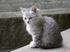 kitty...