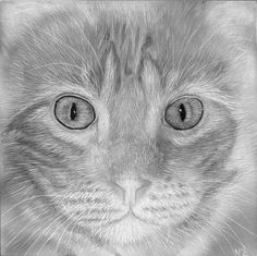 Pets Scratchboard Art, Zimmerman, Pet Portraits, How To Memorize Things, Wildlife, Black And White, Pets, Drawings, Artist