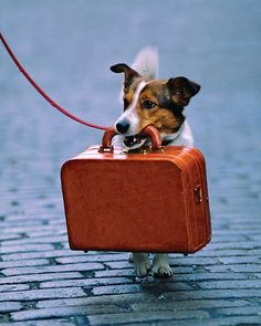 My dog will travel with me just like this: style..  Pet Travel: How to Travel Safely with Pets - Martha Stewart Petkeeping
